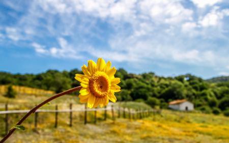 Заставки цветы, цветочки, цветочек, желтый