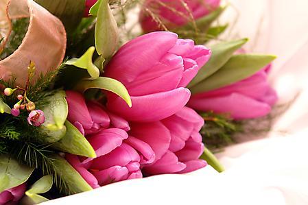 Обои красивые тюльпаны скачать фото