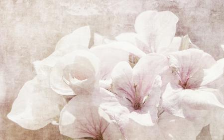 Фото цветы, природа, стиль