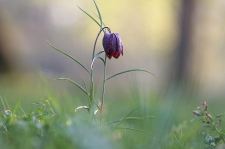 Фото трава, цветок, полевой, размытость
