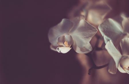 Фото орхидеи, цветы, лепестки