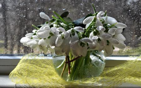 Фото букет, весна, вода, дождь