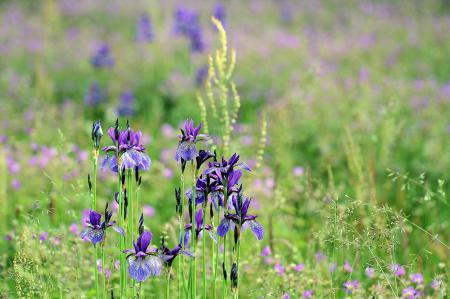 Обои лето, поле, трава, цветы