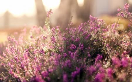Фото лето, поляна, цветы, полевые