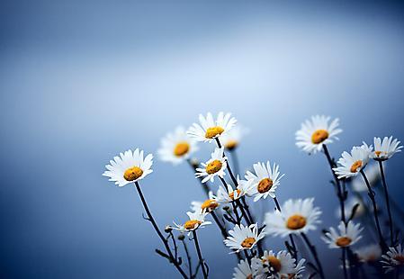 Цветы каждый день на сайте вас ждут