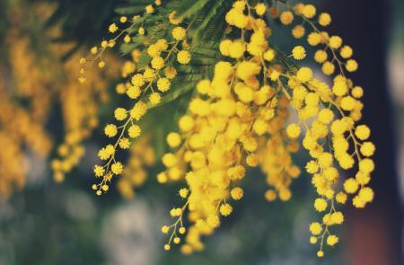 Скачать на рабочий стол фото цветы