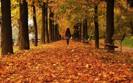Фото осень, улица, листья, город