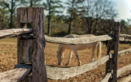 Фотографии забор, макро, конь