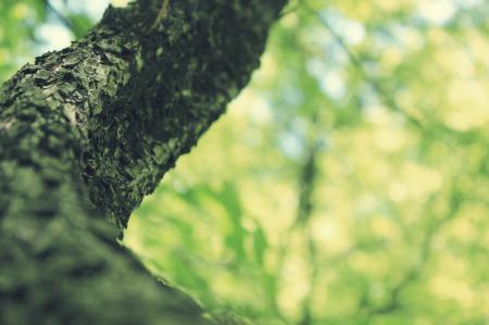Фото кора, дерево, ствол, деревья