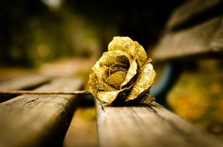 Обои роза, цветок, золотой