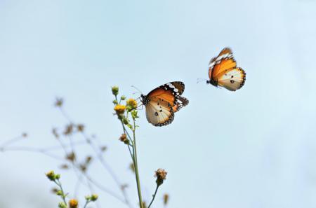 Фотографии природа, бабочки, цветок, макро