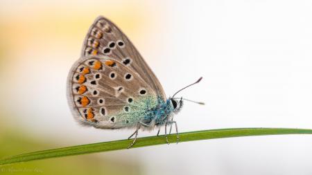 Фото бабочка, макро, цветок, природа