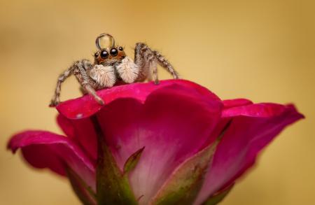 Фотографии макро, паук, цветок, капля
