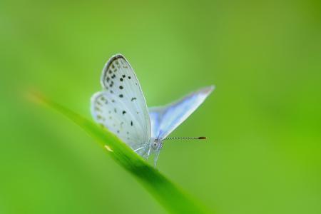 Обои травинка, лист, бабочка, бледно-голубая