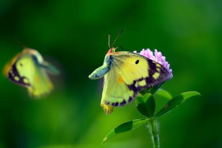 Обои макро, бабочки, цветок, фон