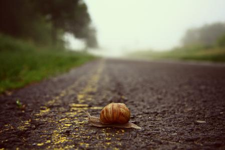 Фото улитка, дорога, ползёт, обочина