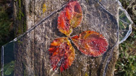 Обои лед, листья, осень, первые заморозки