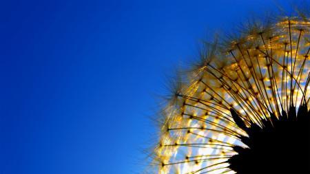 Картинки растение, одуванчик, былинка, небо