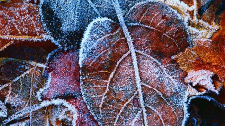 Картинки фон, листья, иней, мороз
