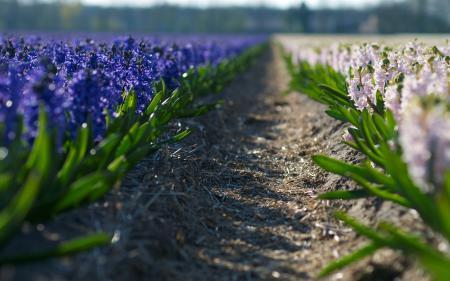 Заставки макро, поле, цветы, цветочки