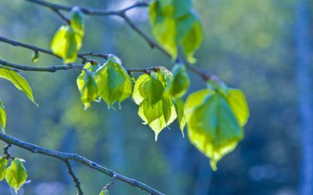 Обои весенняя природа, весна, весенние обои, макро фото листьев