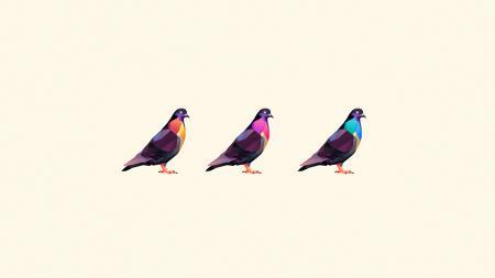 Картинки голуби, птицы, три, окрас