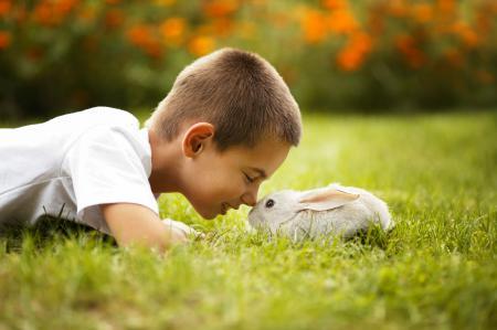 Картинки мальчик, кролик, улыбка, трава