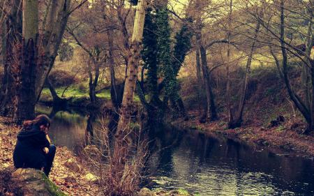 Обои природа, осень, лес, водоём