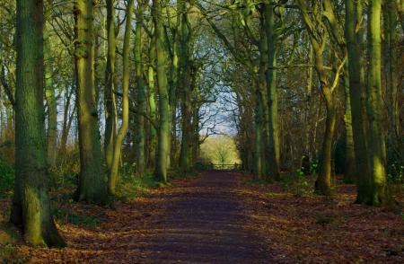 Заставки лес, тропа, пейзаж, природа