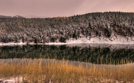 Картинки река, лес, пейзаж
