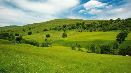 Картинки Пейзаж, трава, деревья, зелень