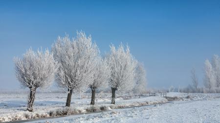 Фотографии зима, поле, деревья, снег