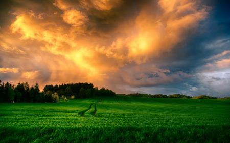 Обои поле, закат, пейзаж