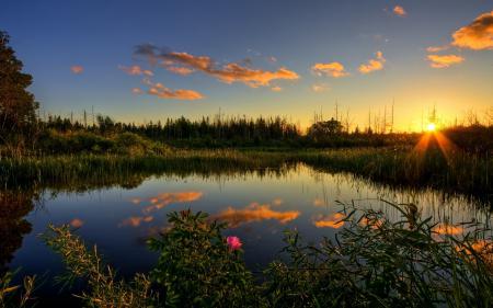 Фото пруд, осень, лес, шиповник