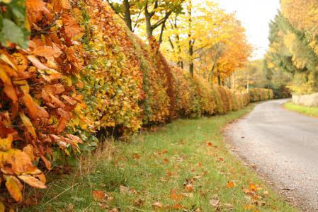 Заставки осень, дорога, деревья, кусты