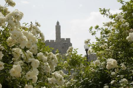 Обои иерусалим, башня, фонарь, цветы
