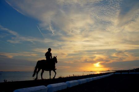 Картинки закат, солнце, вода, лошадь