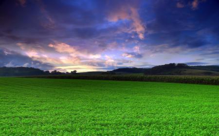 Картинки пейзажи, фото, поле, трава