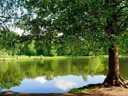 Заставки парк, пруд, дерево