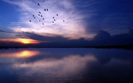 Фото пейзажи, птицы, обои, фото