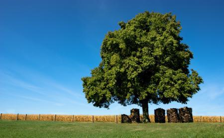 Фотографии обои, природа, деревья, поле