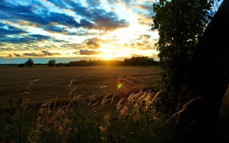 Обои пррода, пейзаж, поле, пшеница