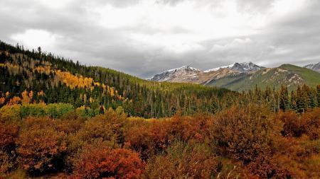 Фото горы, лес, деревья, природа