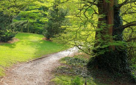 Заставки лес, деревья, тропинка, ветки