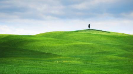 Фотографии пейзаж, луг, дерево, поле