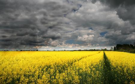 Фотографии небо, облака, поле, рапс