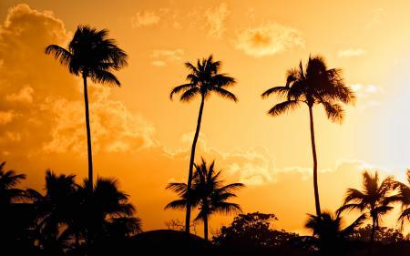 Заставки пальмы, закат, вечер, свет