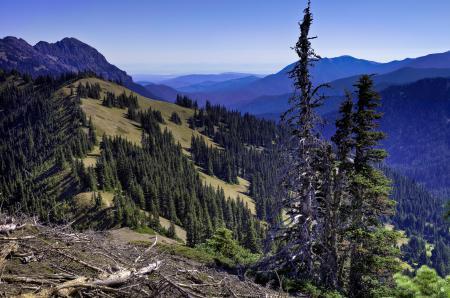 Фото горы, склон, лес, небо