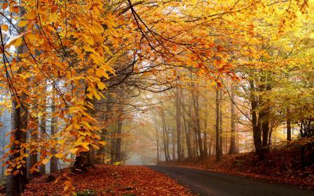 Фотографии дорога, осенняя, деревья, листва