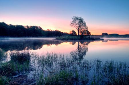 Обои дерево, туман, озеро, закат